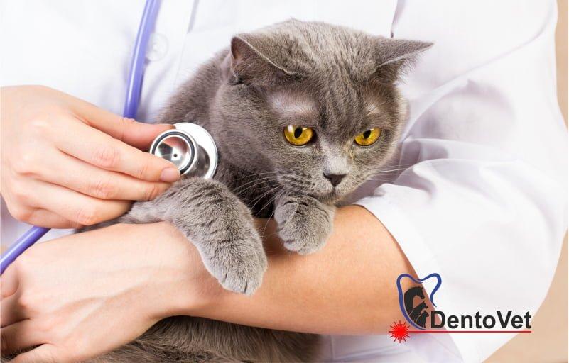 Bolile dentare ale animalelor de companie netratate pot da complicații