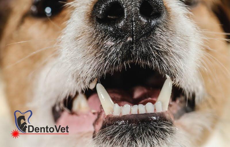 Examinare orală a animalelor de companie