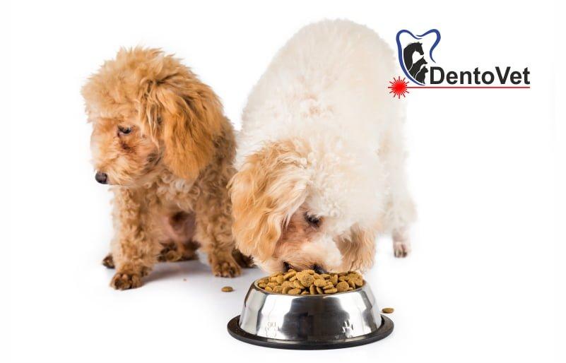 Tulburări ale apetitului la animalele de companie