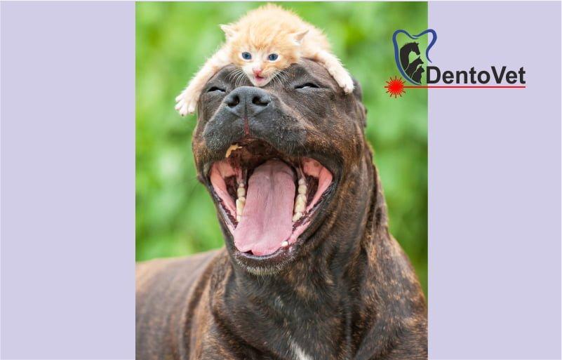 Semne ale durerii la animale - Mirosul gurii