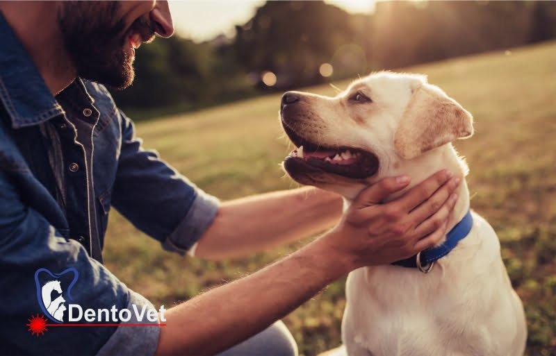 Periajul dentar la câini