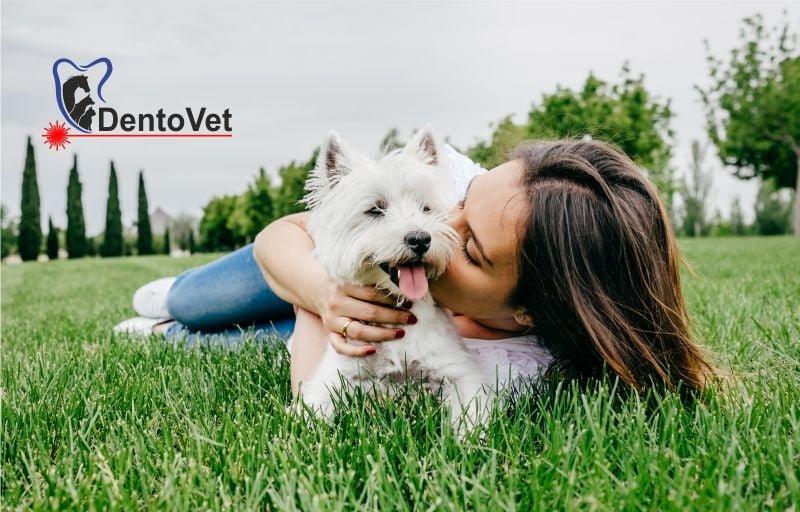 Reflexul periajului dentar la animalele de companie