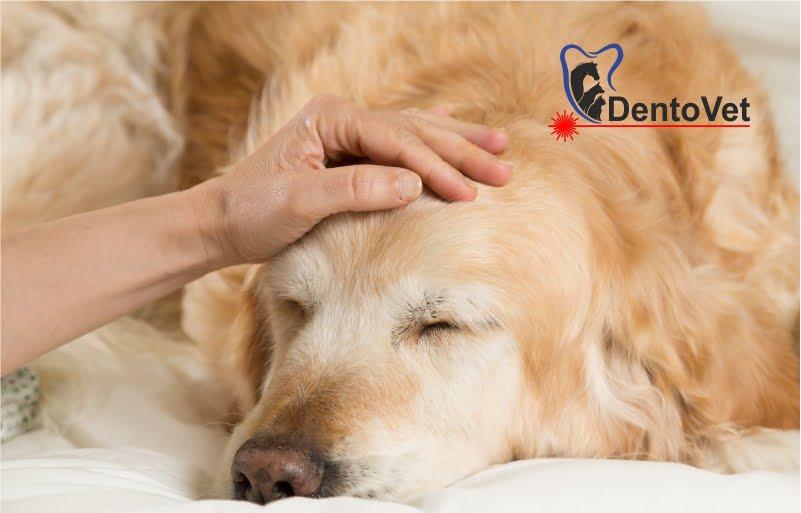 Subdiagnosticare in stomatologia veterinara