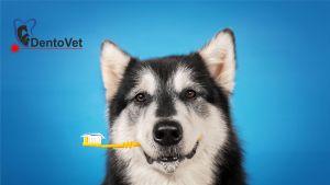 Rasele Medii mari de caini și boala parodontală la câini