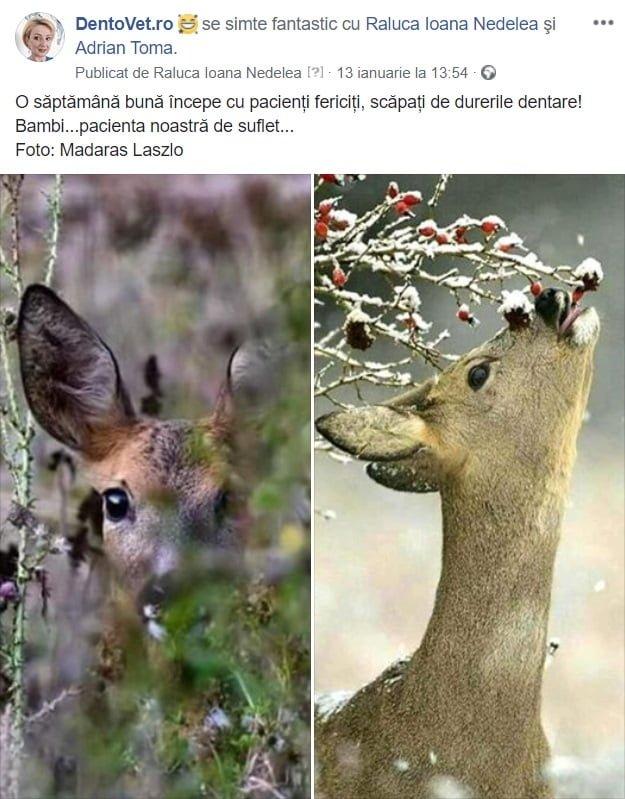 Bambi - pacienta noastră de suflet