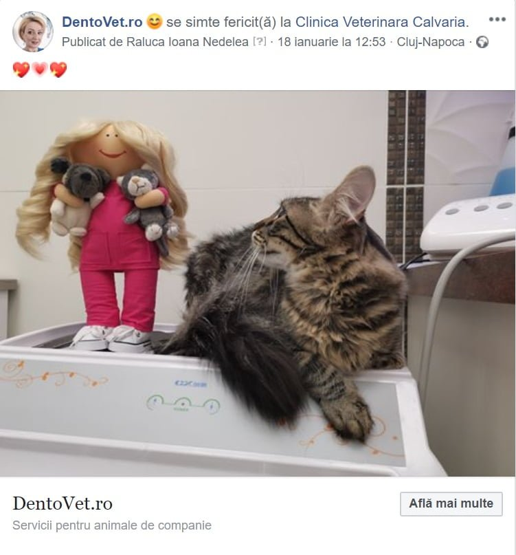 Pisica și Păpușica Dentovet
