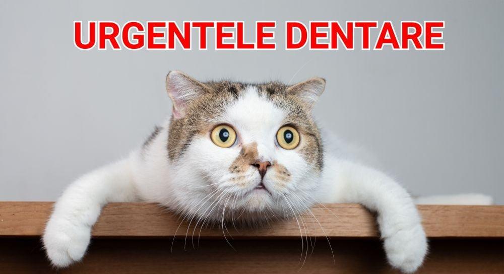 Urgențele dentare în stomatologia veterinară la feline