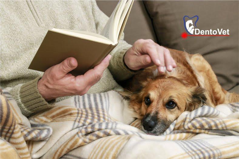 Urgențele dentare în stomatologia veterinară la câini - de final