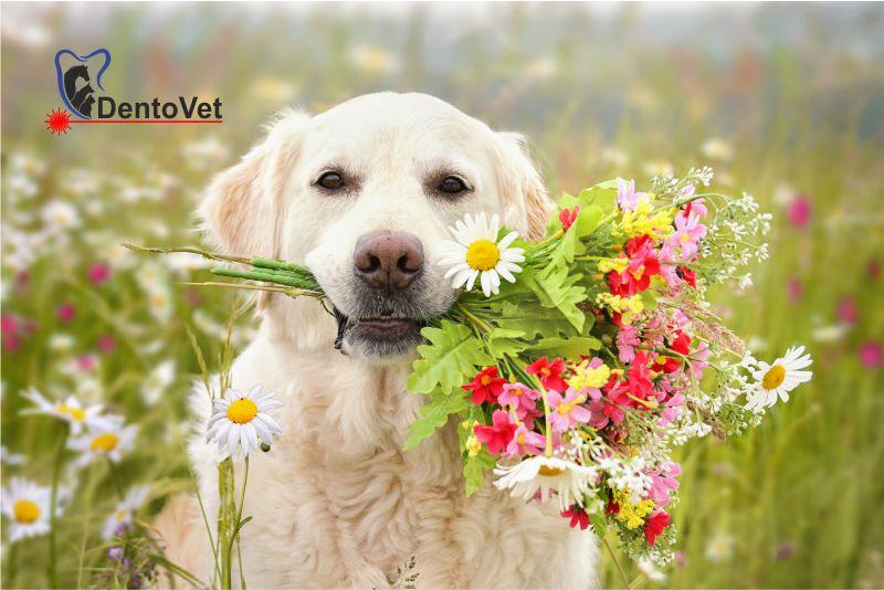 Blogul și vlogul de Sărbătoarea Floriilor - felicitare