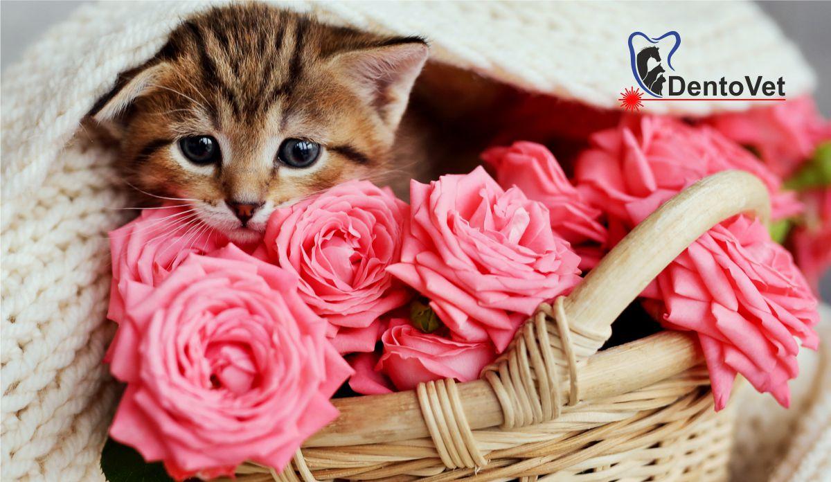 Blogul și vlogul de Sărbătoarea Floriilor