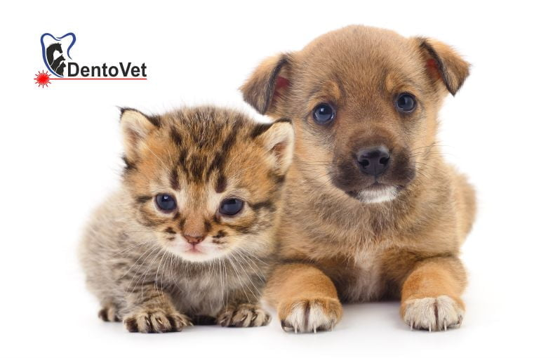Pediatria stomatologică veterinară canină și felină