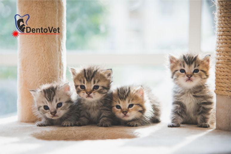 Pediatrie pisici