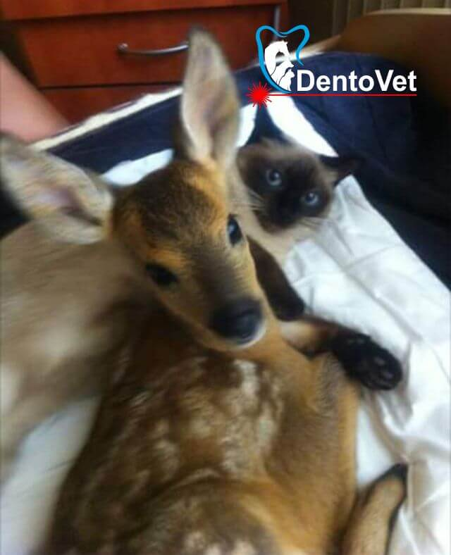 Bambi bebe