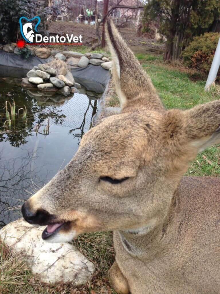 Bambi la iaz