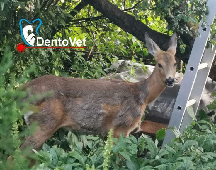 Bambi nenaparlita