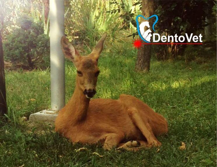Bambi sezand