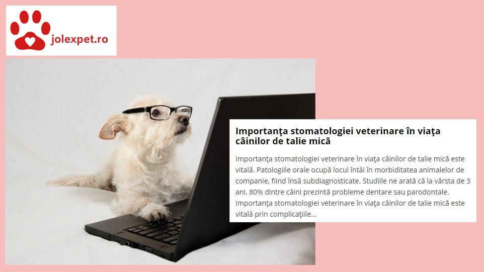 Importanta stomatologiei veterinare la rasele mici