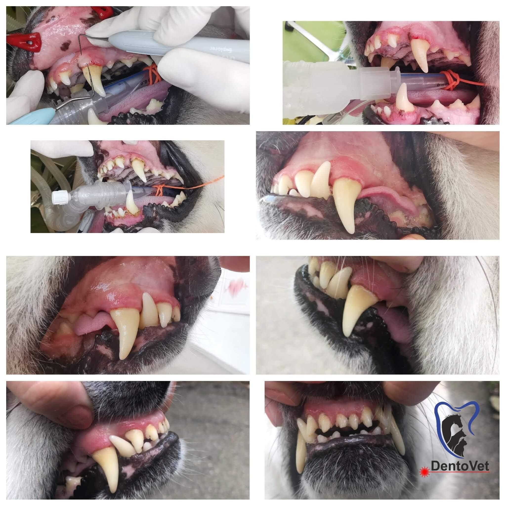 Patologiile orale cazul 1 foto 2