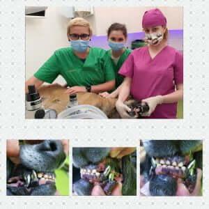 Coroanele dentare pentru câini