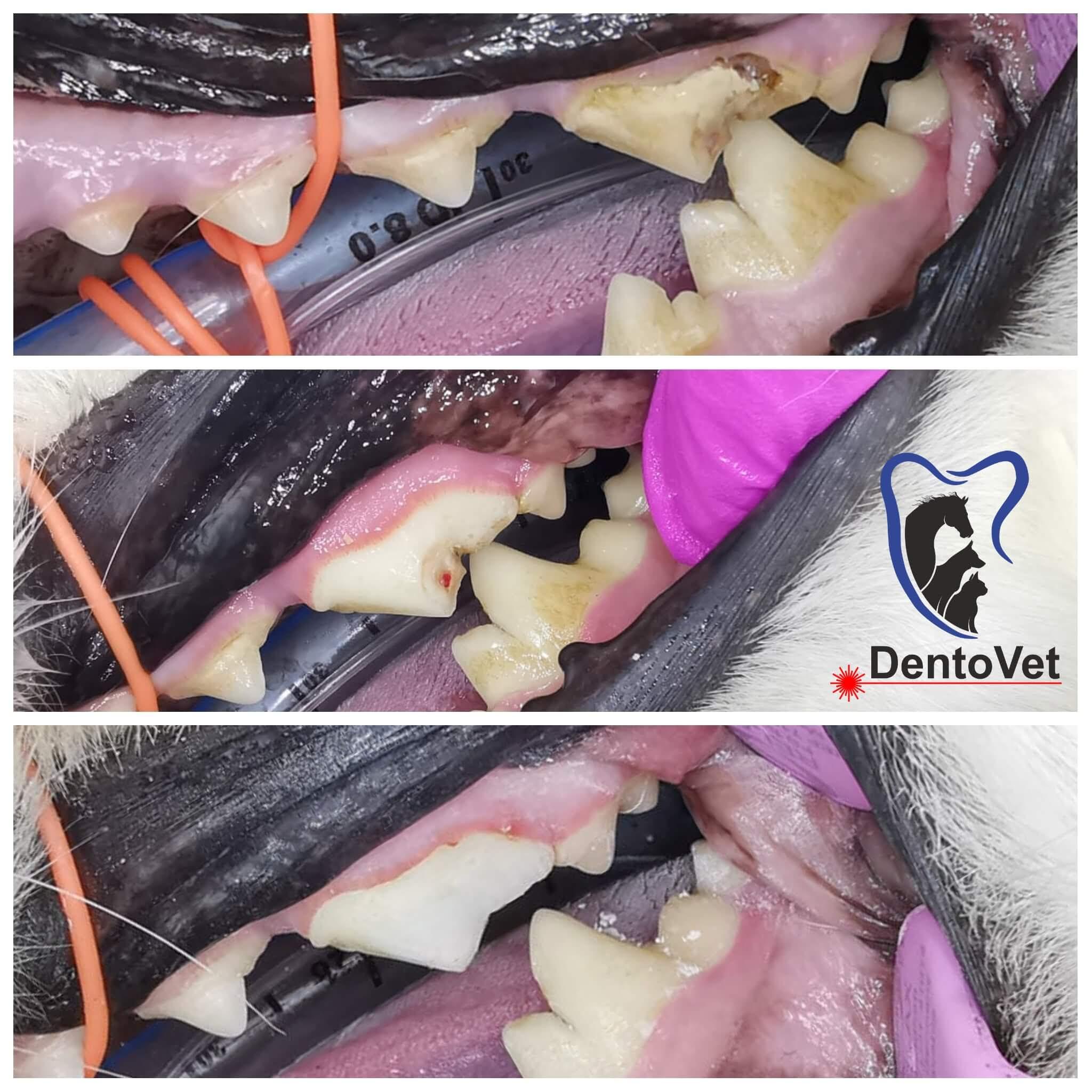 Patologiile orale - cazul 4 foto 1