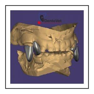 Coroanele dentare pentru câini - proiectie 3D