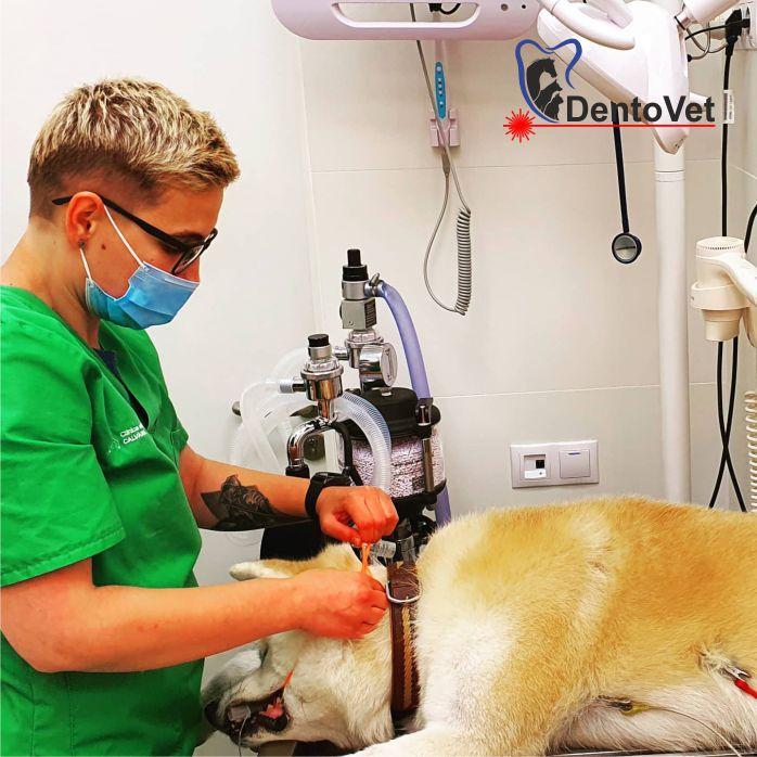 Anestezia în stomatologia veterinară - Andreea Marincus