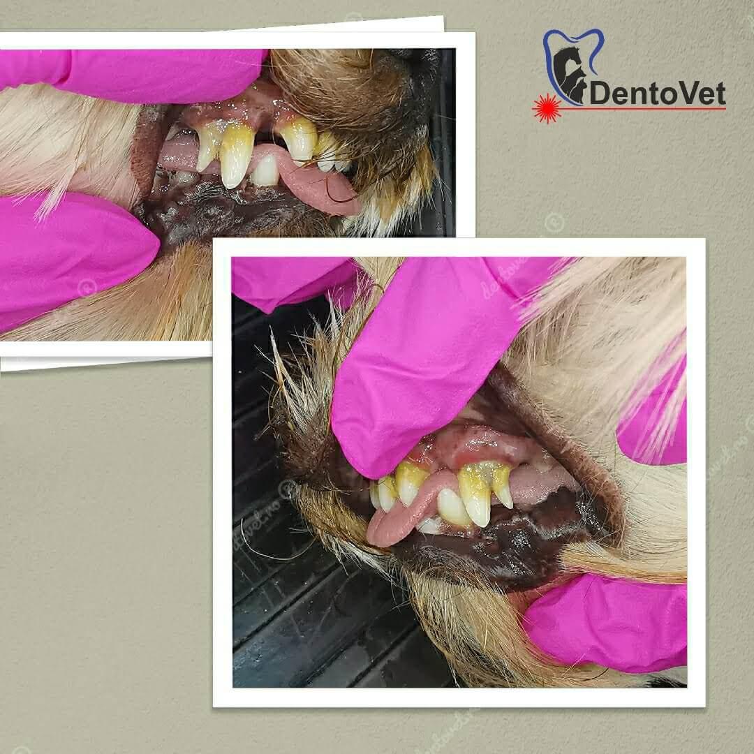 Persistența dinților temporari - foto 4 ani