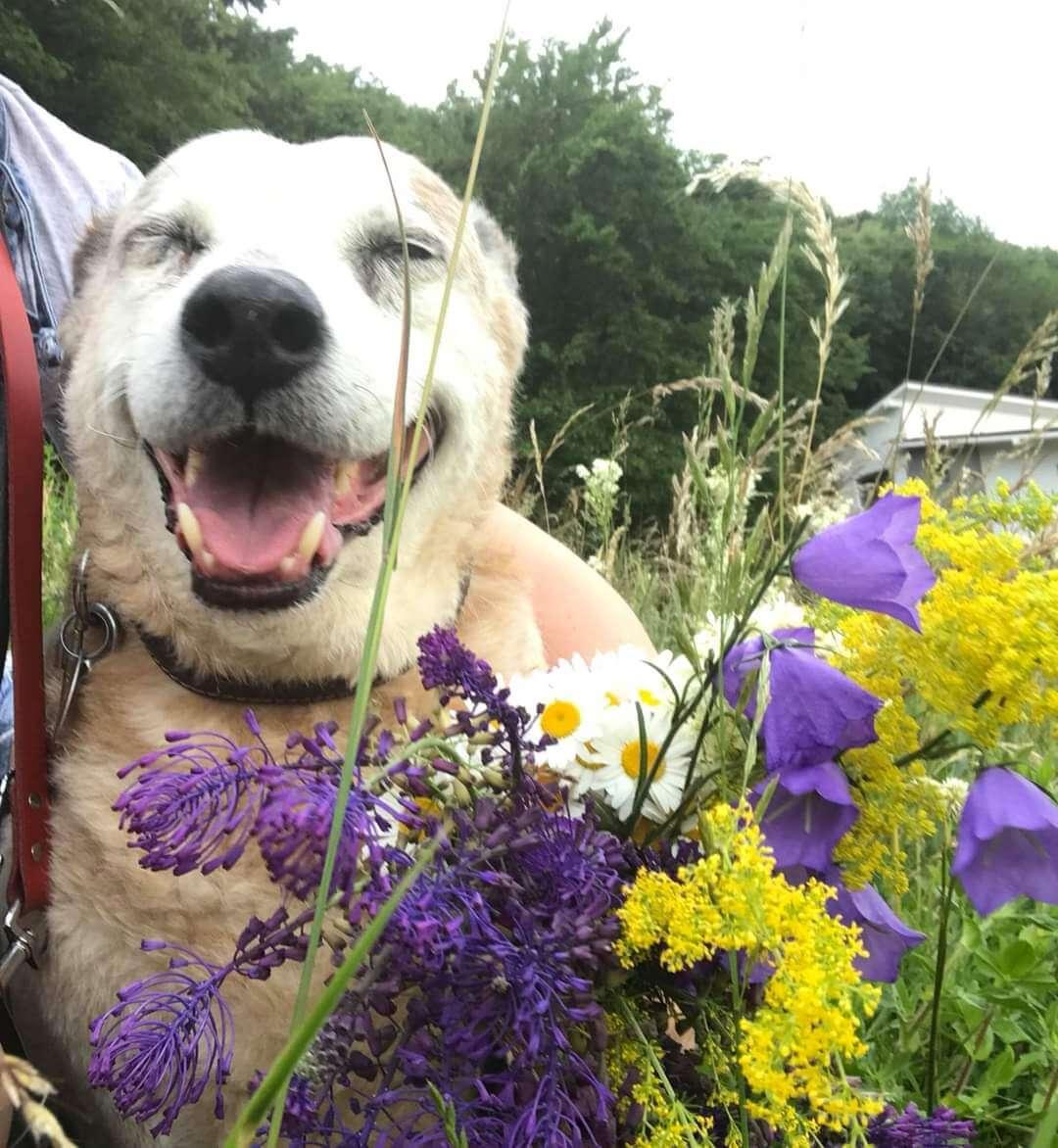 Lady cu flori