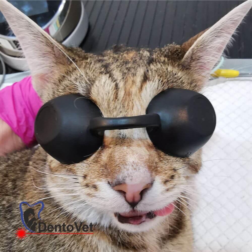 Maya cu ochelari
