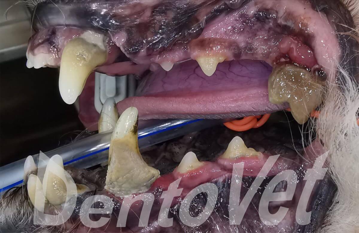 Parodontopatie