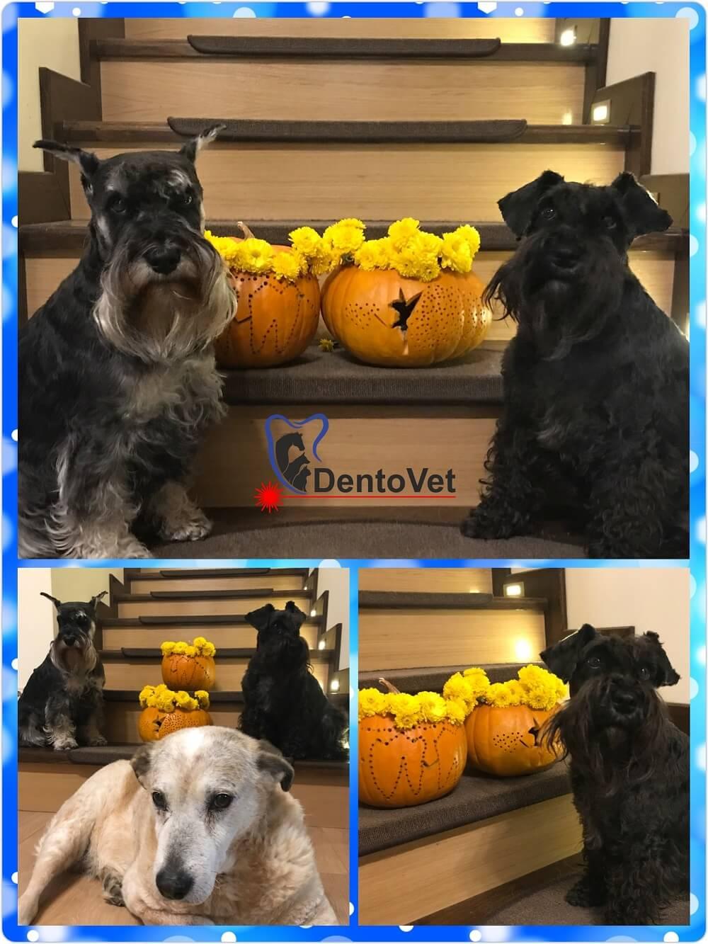 Halloween Dentovet 2018