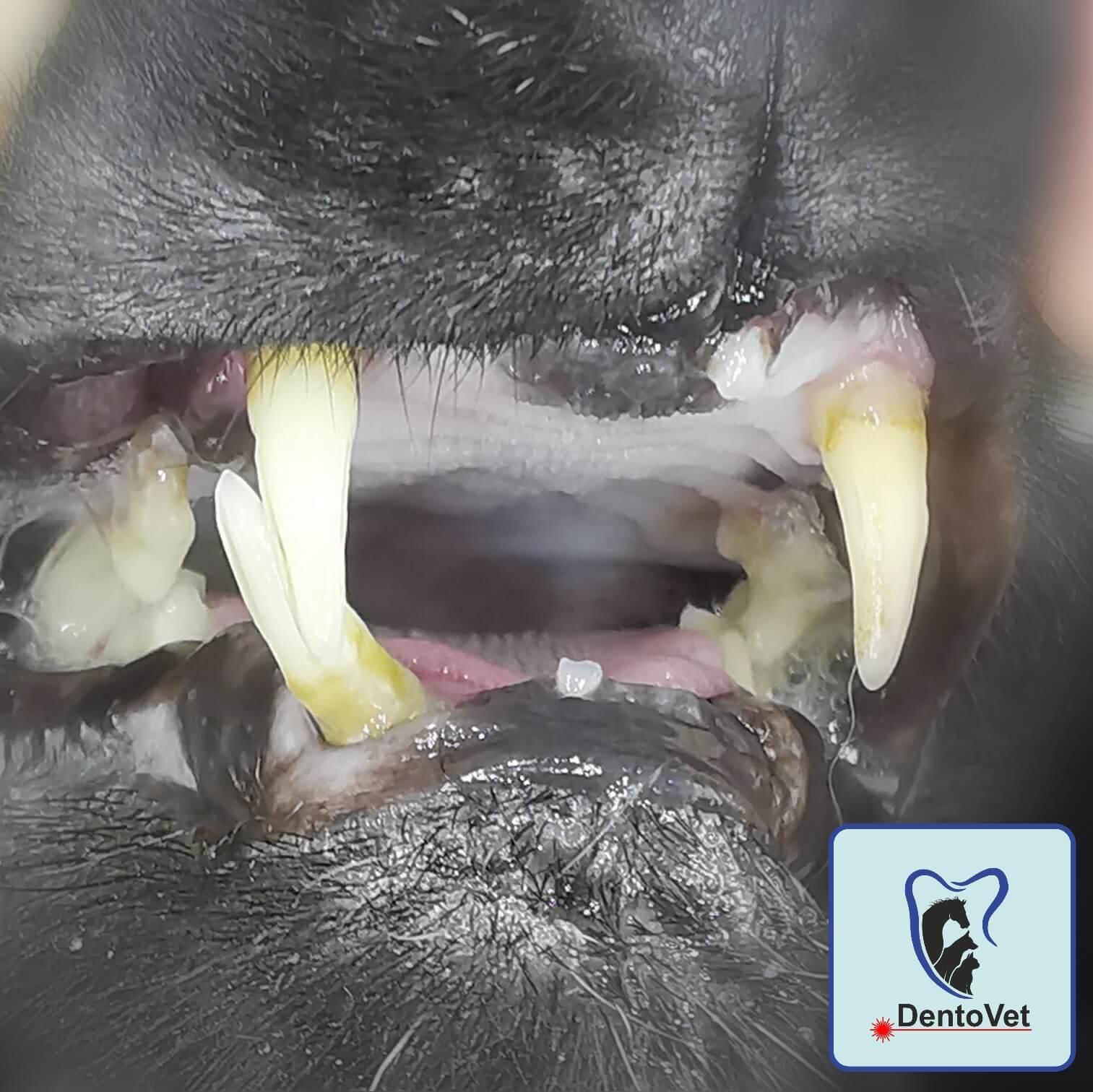Imposibilitatea inchiderii gurii la pisici