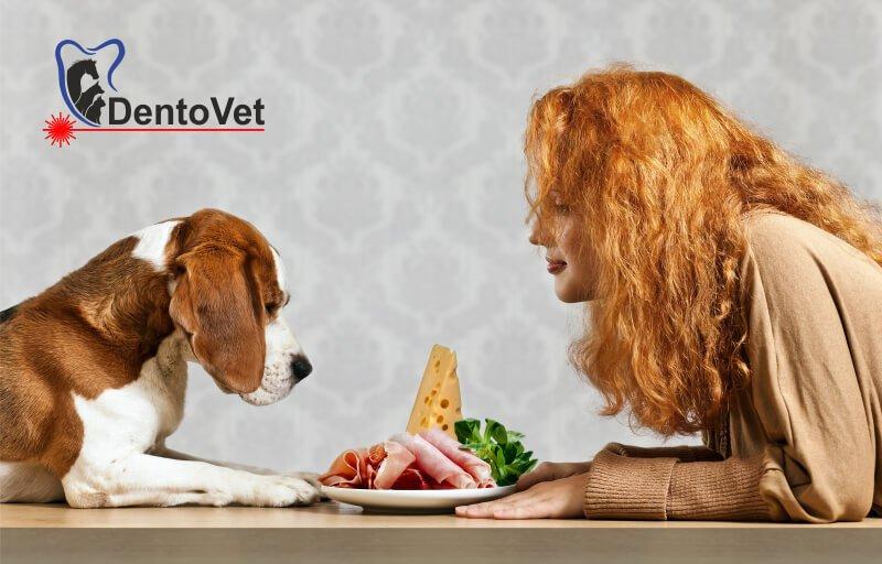 Refuzul hranei la animalele de companie