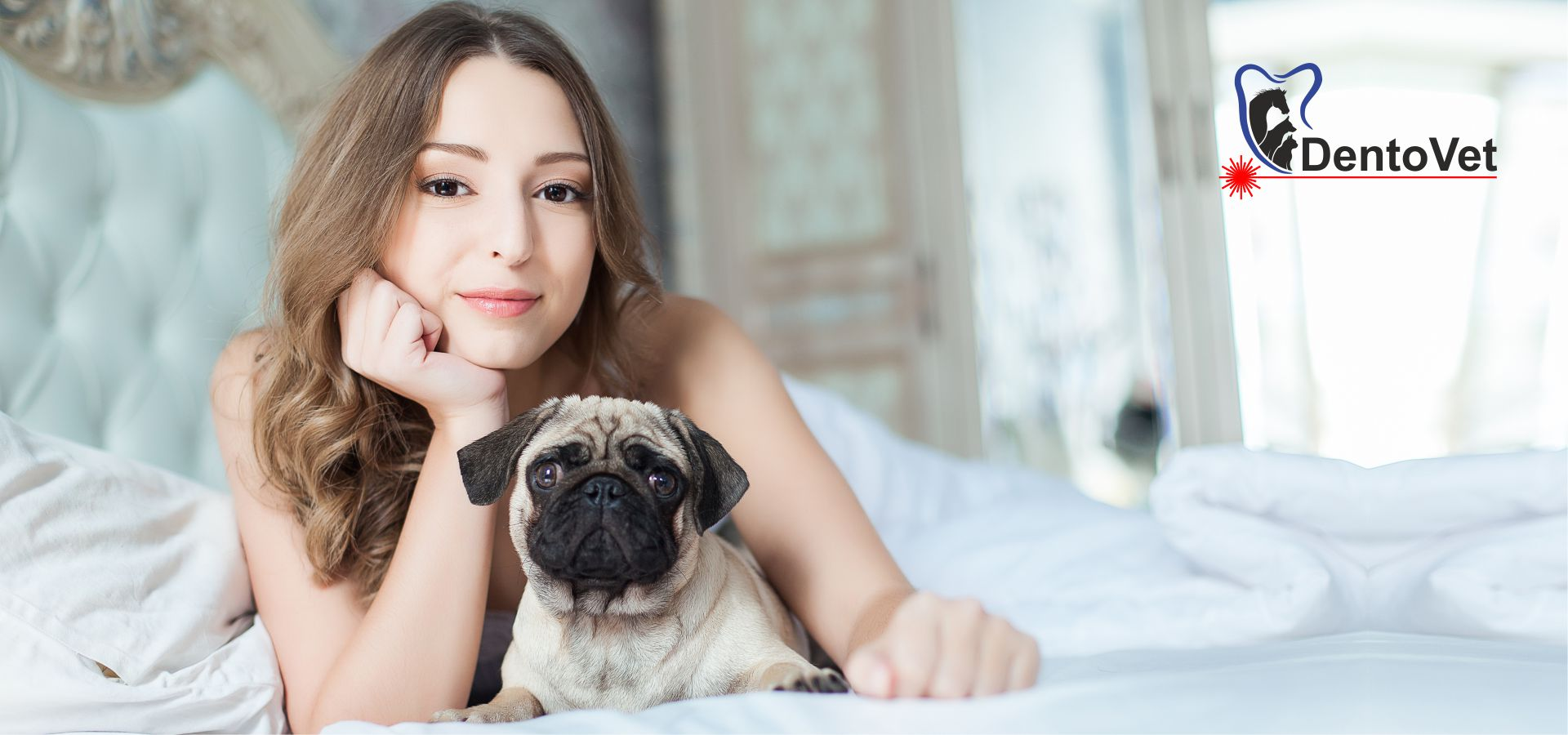 Stomatologie veterinara pentru câini din rasa mops