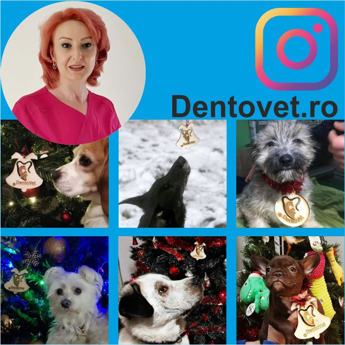 Instagram Dentovet