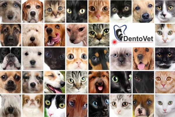 Retrospectiva 2020 Dentovet stomatologie veterinara