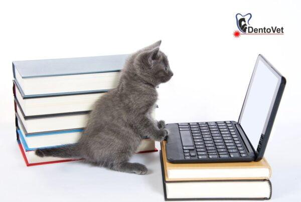Caz de stomatologie veterinară la pisică - studiu