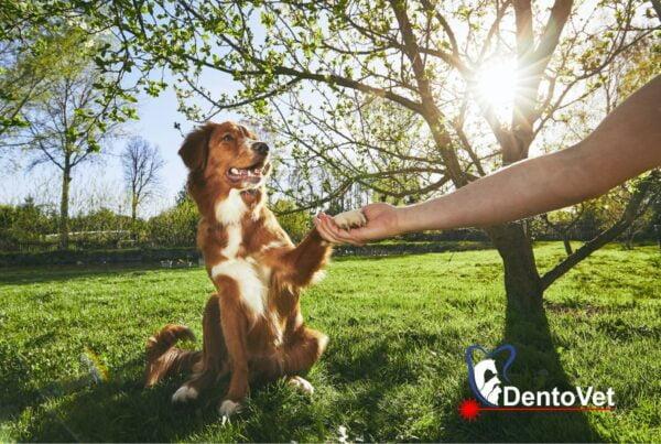 O saptamana plina de stomatologie veterinara - reprezentativa