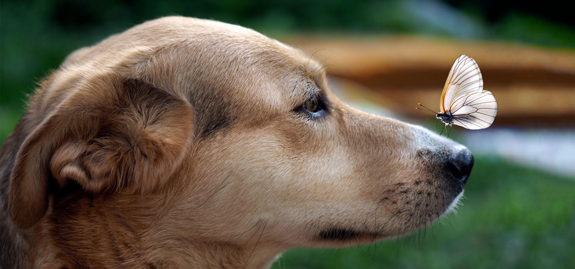 8 Martie plin de stomatologie veterinară