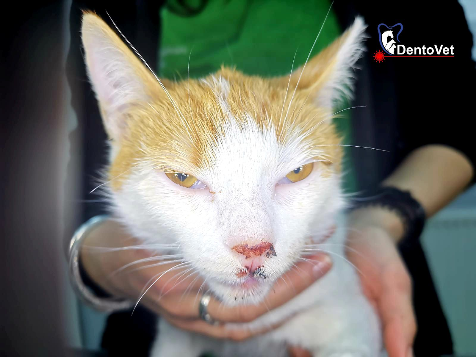 Pisicile si caderile de la inaltime LG - Epistaxis