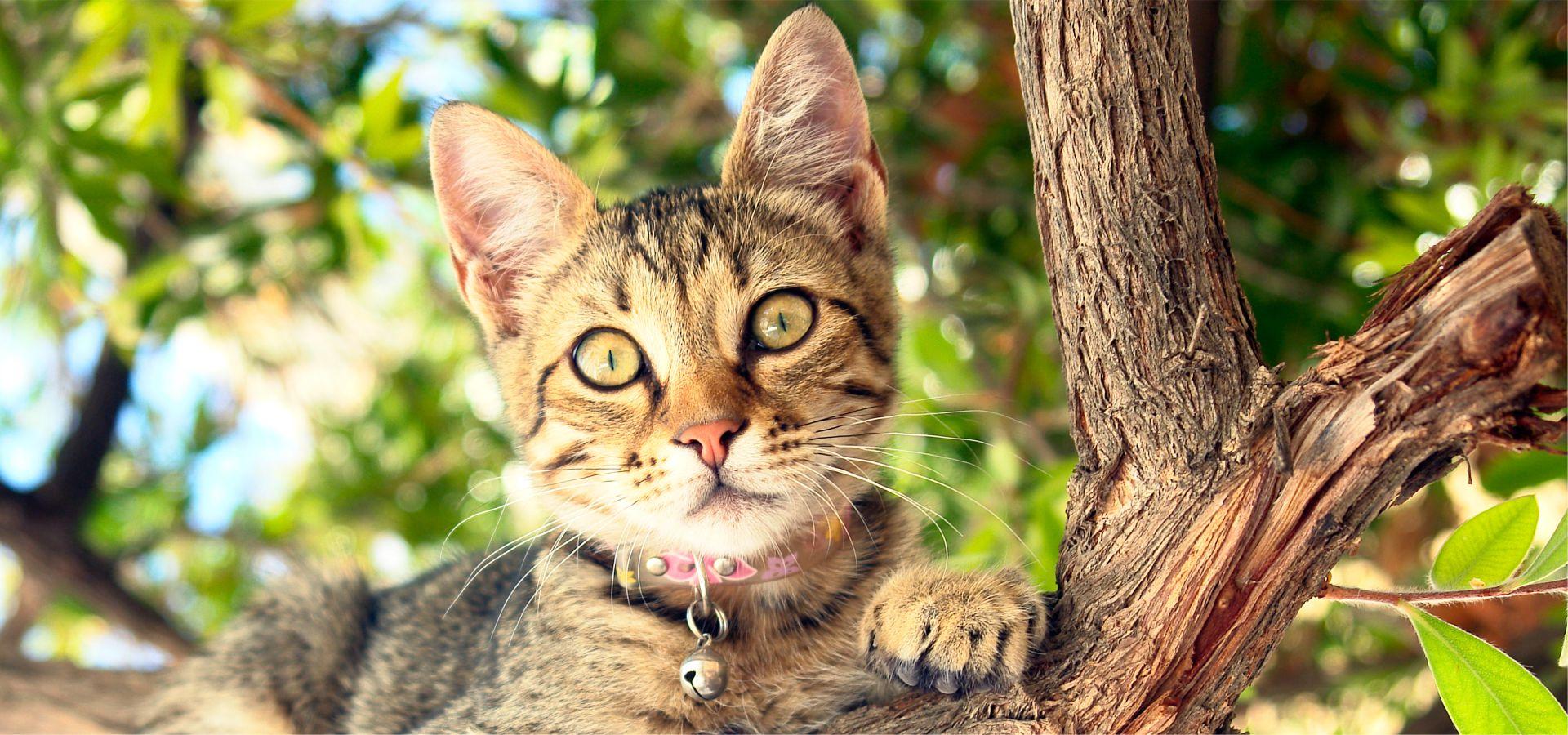 Pisicile și căderile de la înălțime