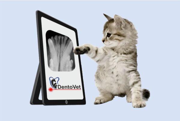 Radiologia dentara veterinara