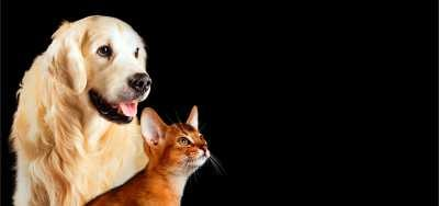 Cazuri de stomatologie veterinara