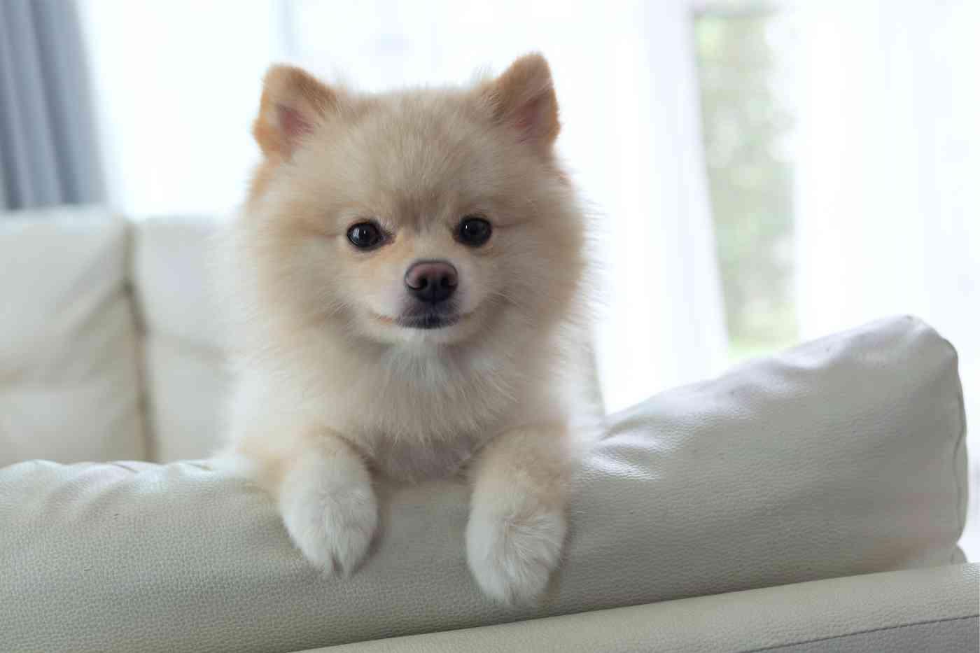 Osteomielită impresionantă la câine